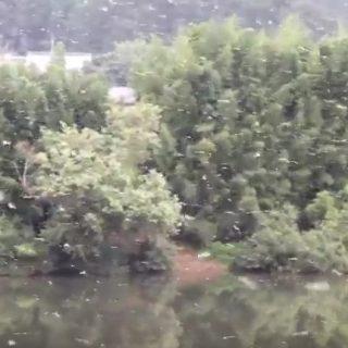 8.16 カゲロウの大量発生